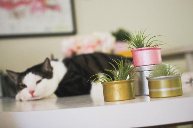 Cat Food Planters