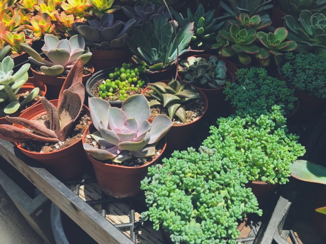 Potted - Atwater Village