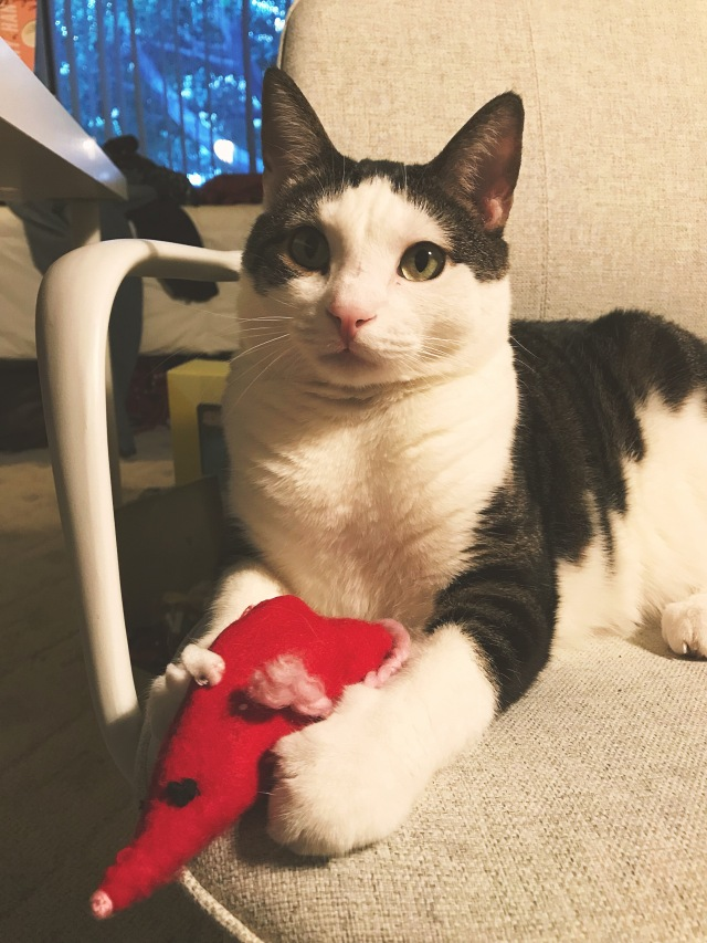 mouse cat toy